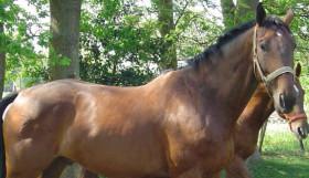 homepage-tierarzt-hildenbeutel-pferde